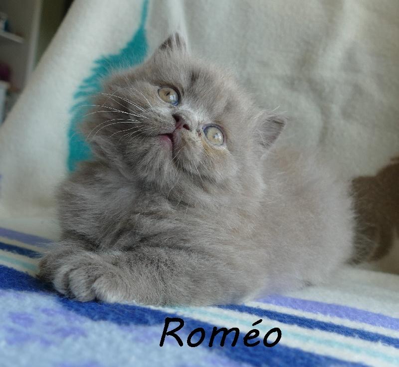 ROMEO -