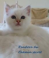 Pandora Du Chemin Secret
