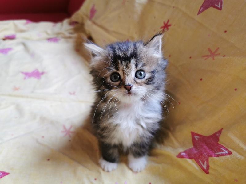 SIGGI Of Pretty Little Cat -
