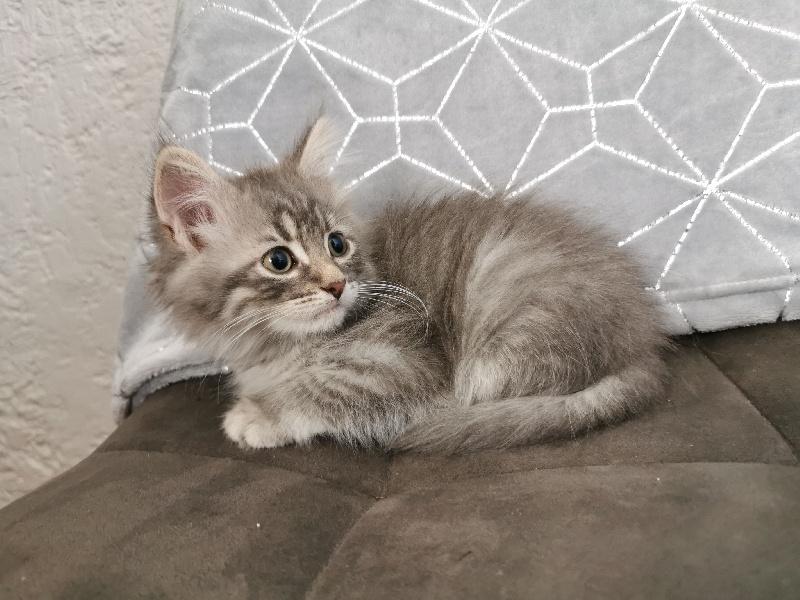 SOBEK Of Pretty Little Cat -