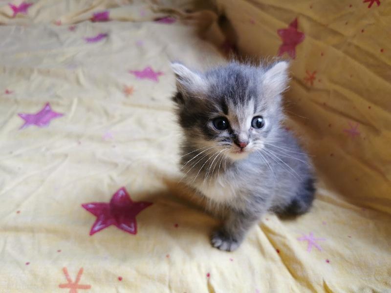 SAM Of Pretty Little Cat -