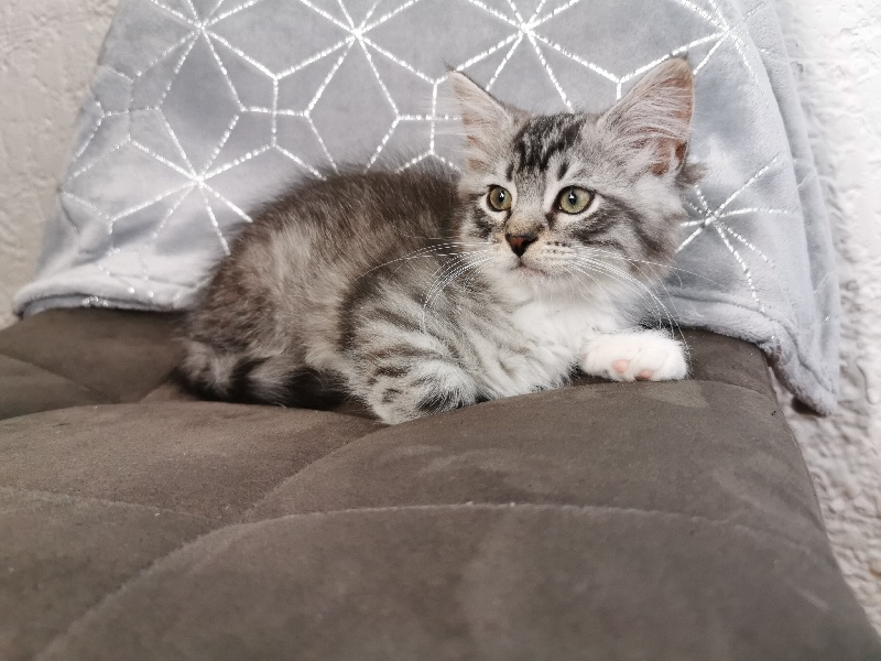 SACHA Of Pretty Little Cat