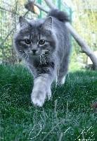 Fortuna comandor lynx