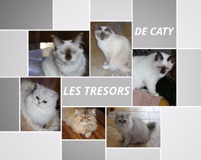 ELEVAGE DES TRESORS DE CATY