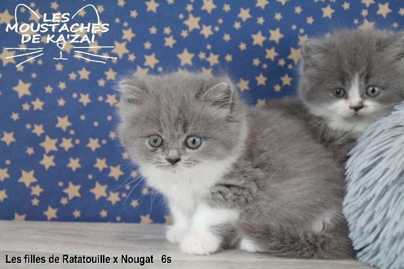 Siboulette
