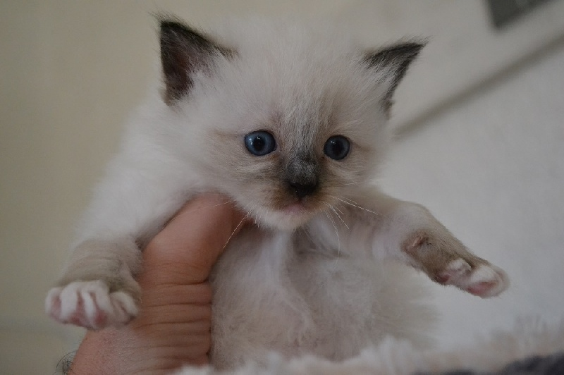 seal mitted -
