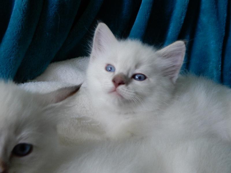 Percy -