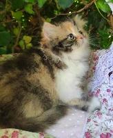 Symphonie des Fleurs Fée-lyne - Persan
