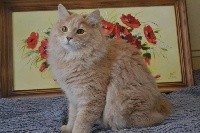 CH. Oliver bobtail*house
