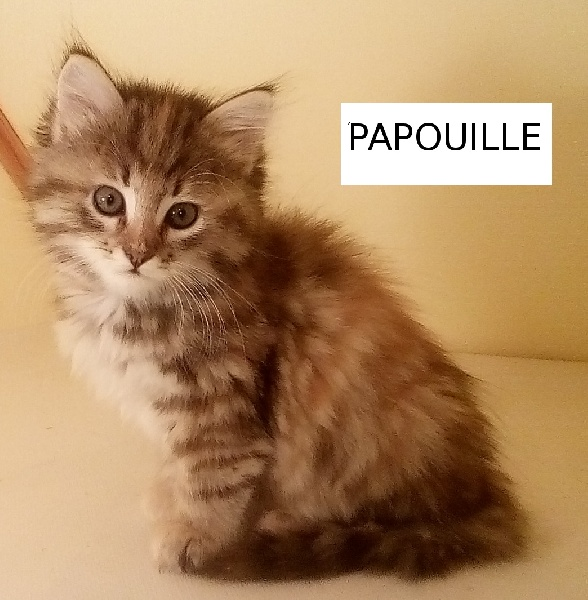 PAPOUILLE -