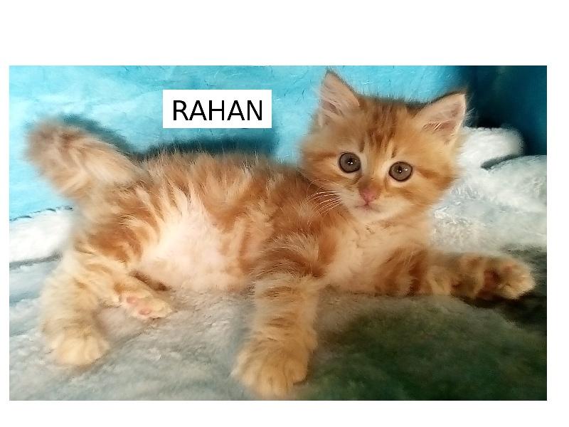 RAHAN -