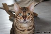 Mowgli de transzendenz