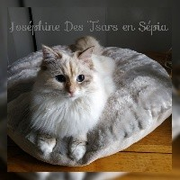 Oz Josephine Imperatrice Des Tsars En Sepia