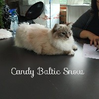 CH. Candy baltic snow