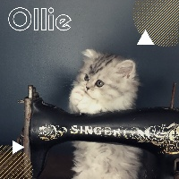 Ollie de la brocante - Highland Straight