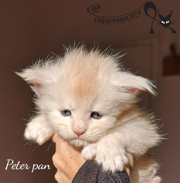 Peter pan  -