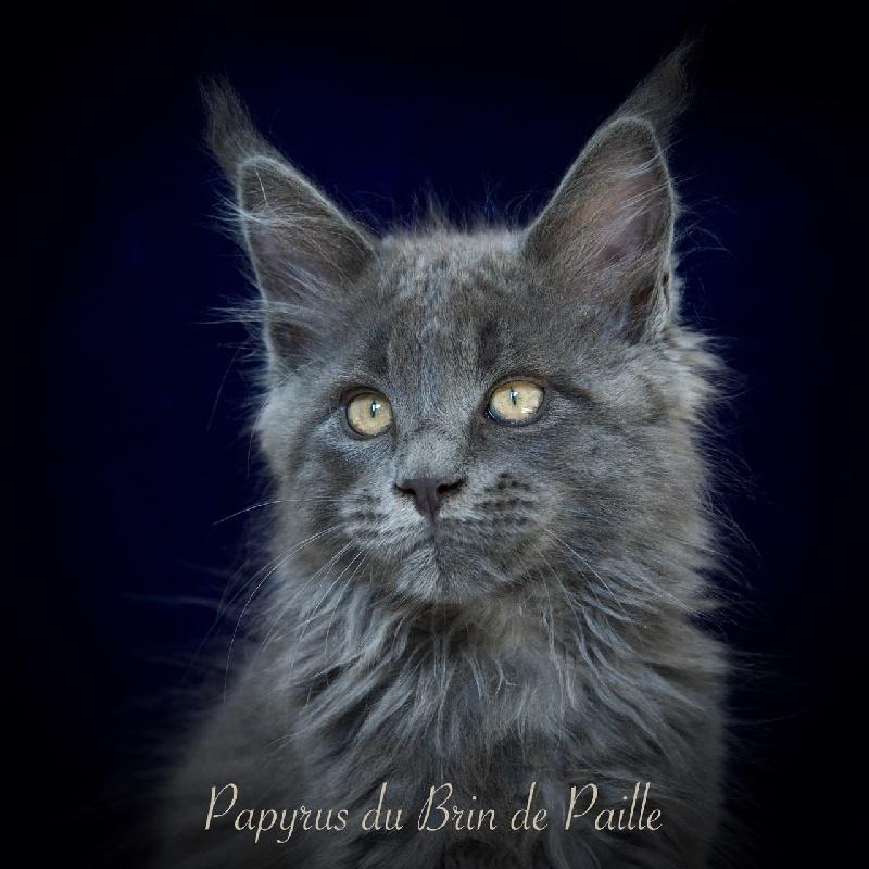Papyrus -