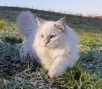 Chub(alias Ponchick) tzar-koshka
