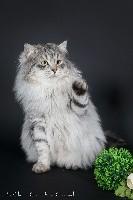 CH. Wisconsin phantom cats
