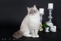 Lovely lady de l empire russe