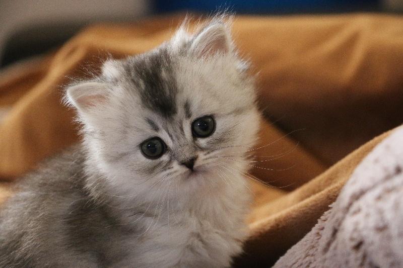 My special cat Ria -