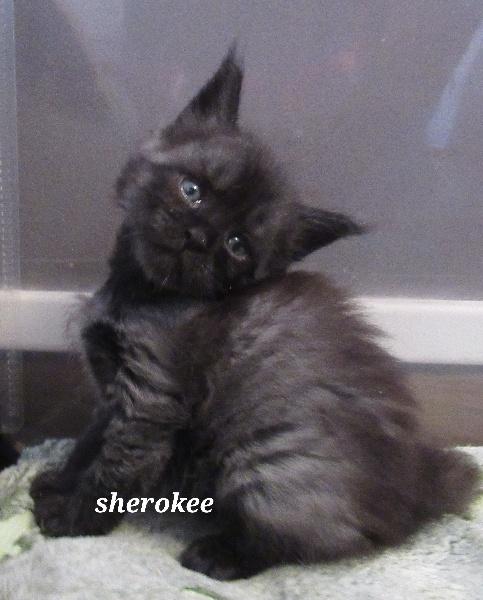 Sherokee