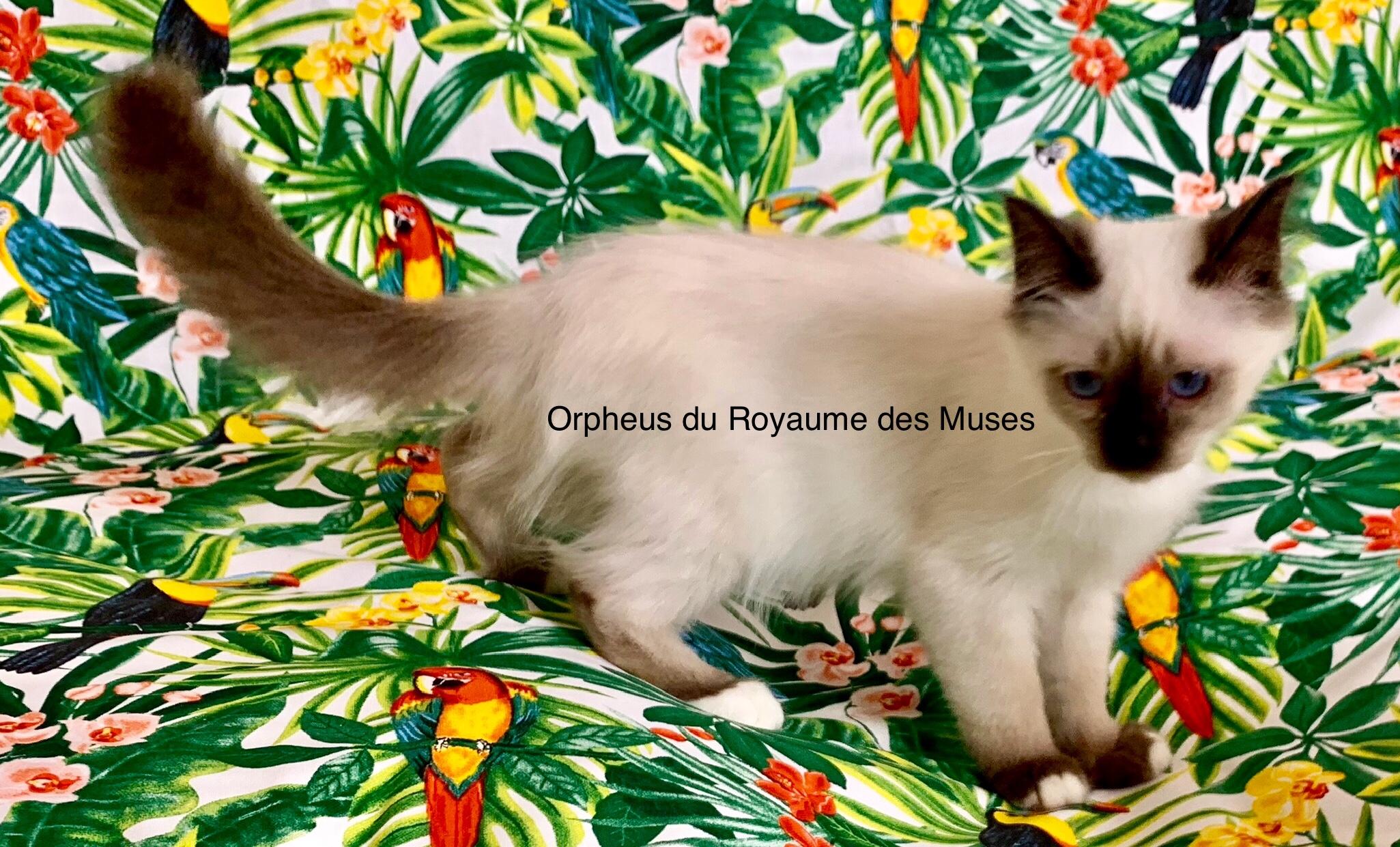 Orpheus du Royaume des Muses -