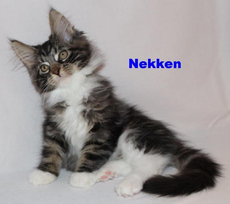 NEKKEN -