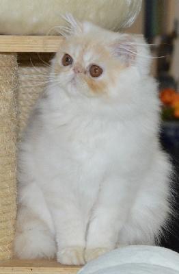 du Pairi Daeza - les dernières photos de notre petite star, MISHIKO