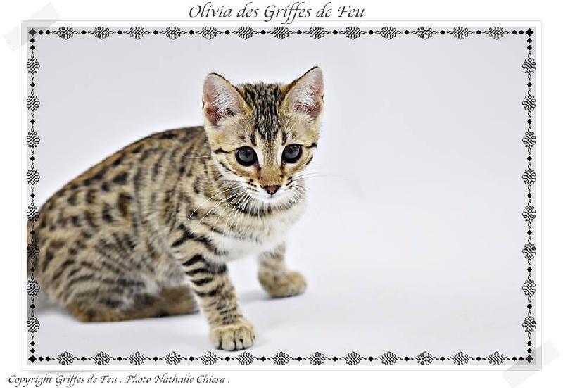 Olivia des Griffes de Feu -